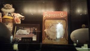 Algonquin's Cat