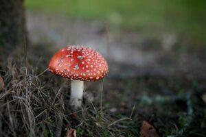macro photography of red mushroom